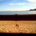 Anjing tersesat di Kuta