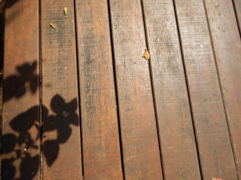 bayang kembang